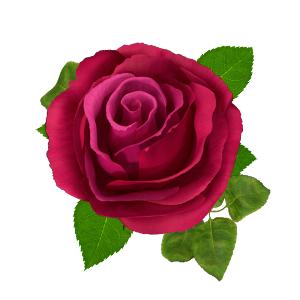 vůně růže
