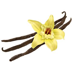 vůně vanilka