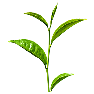 vůně zelený čaj
